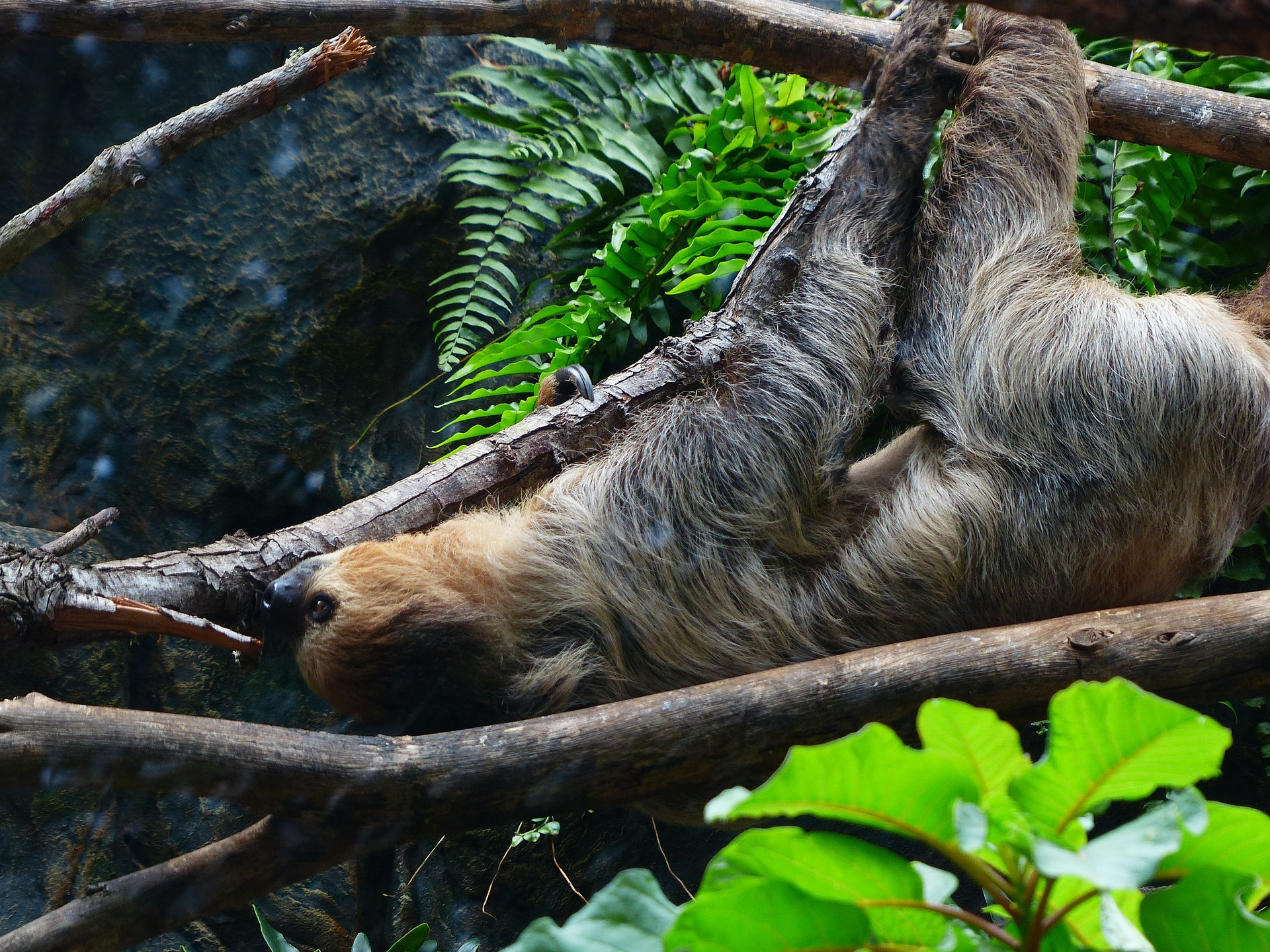 sloth-407088_1920-1