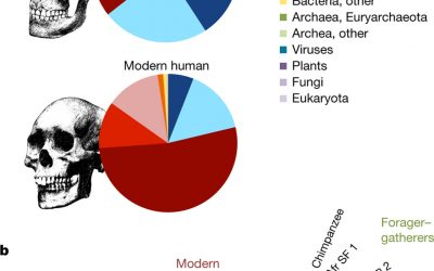 Bacterial community composition at the phyla level of oral microbiota from chimpanzee, Neanderthal and modern human samples. From Neanderthal behaviour, diet, and disease inferred from ancient DNA in dental calculus Laura S. Weyrich, Sebastian Duchene, Julien Soubrier, Luis Arriola, Bastien Llamas, James Breen, Alan G. Morris, Kurt W. Alt, David Caramelli, Veit Dresely, Milly Farrell, Andrew G. Farrer, Michael Francken, Neville Gully, Wolfgang Haak, Karen Hardy, Katerina Harvati, Petra Held, Edward C. Holmes, John Kaidonis, Carles Lalueza-Fox, Marco de la Rasilla, Antonio Rosas, Patrick Semal, Arkadiusz Soltysiak et al. Nature (2017) doi:10.1038/nature21674