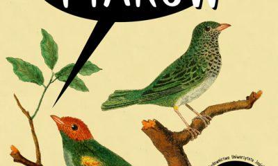 """Od dziś """"ptasi móżdżek"""" nabiera nowego znaczenia. Geniusz ptaków"""