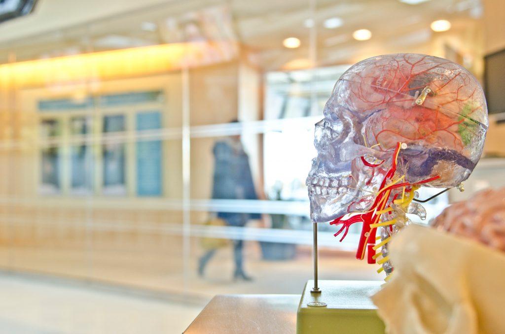 Jak dokarmiać mózg? co otyłość ma wspólnego z mózgiem? Na te i inne pytania odpowiedzą w czasie licznych wykładów eksperci Tygodnia Mózgu 2019. Wydarzenia popularyzujące wiedzę o mózgu odbędą się od 11 do 16 marca, m.in. w Warszawie, Lublinie, Krakowie, Poznaniu czy Gdańsku.
